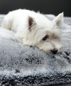 Silver Tipped Faux Fur Dog Blanket
