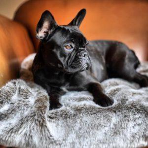 Mushroom Taupe Faux Fur Dog Blanket