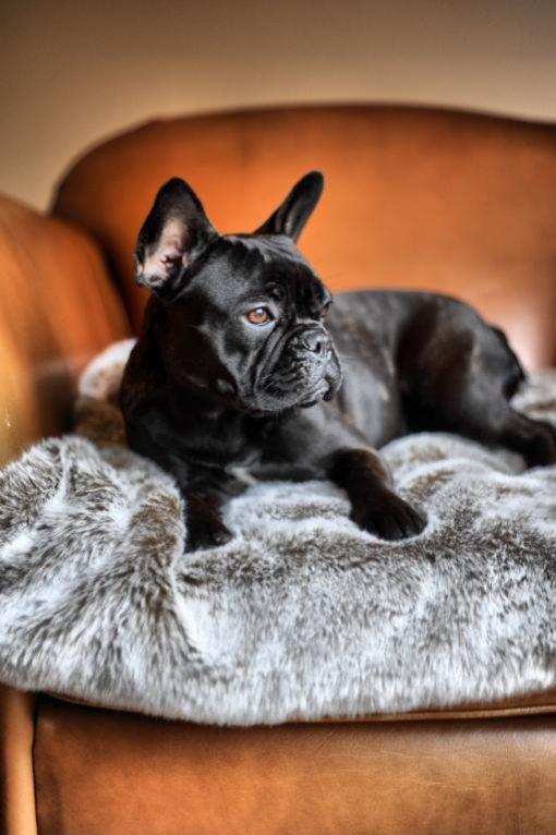 Mushroom Taupe Faux Fur Dog Blanket. . Luxury faux fur throws.