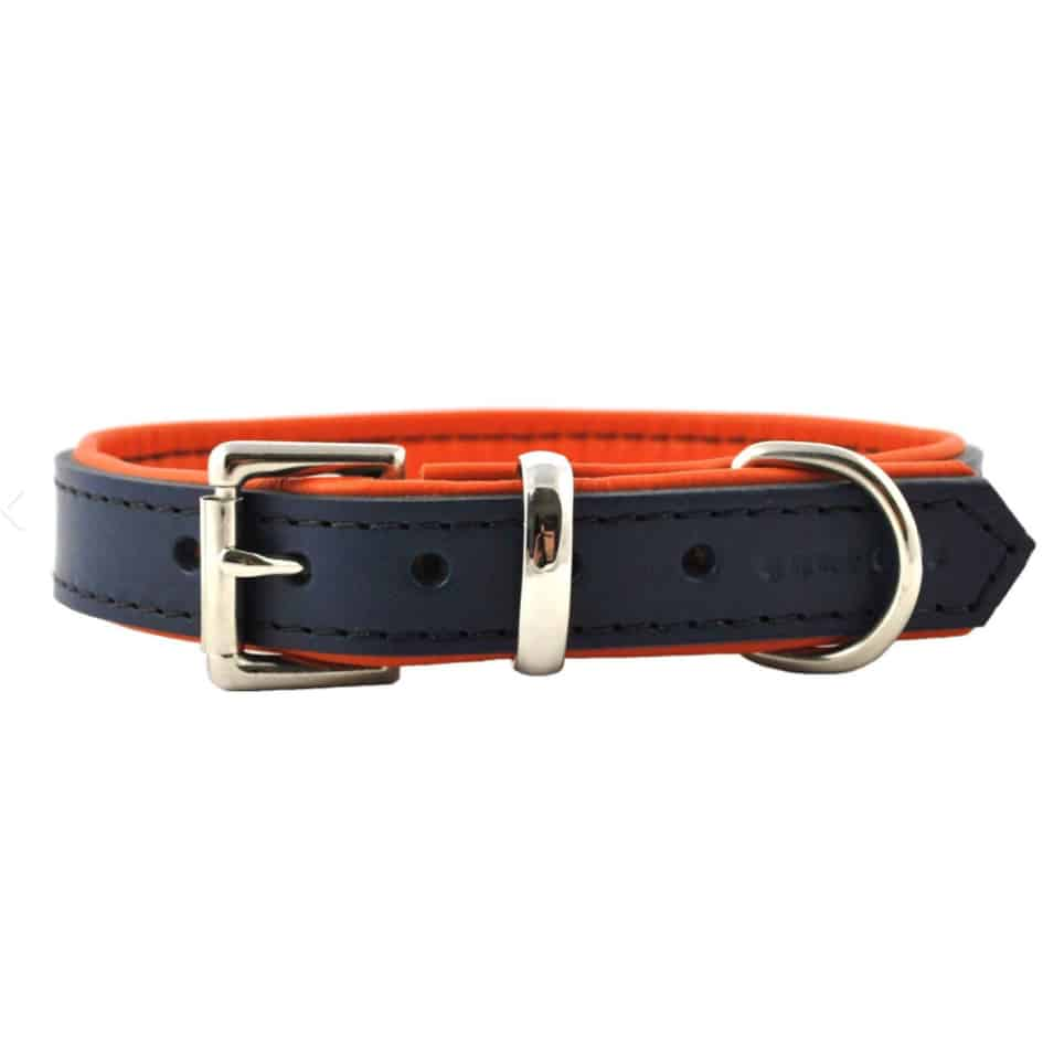 Navy blue and orange padded leather dog collar