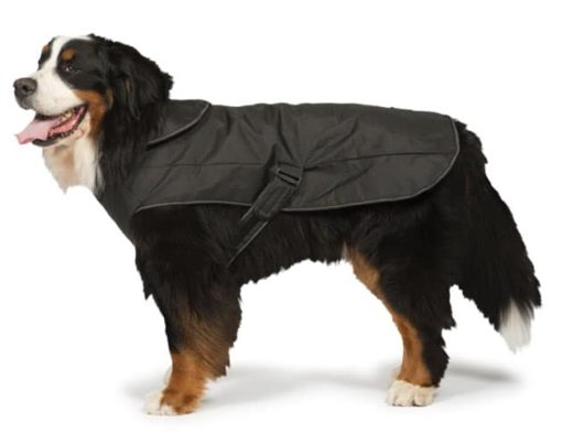 All seasons harness dog coat