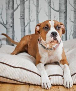 Ivory boxed dog cushion