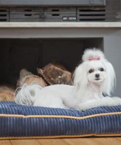 Blue Corduroy boxed dog cushion