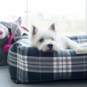 Grey Scott bolster dog bed