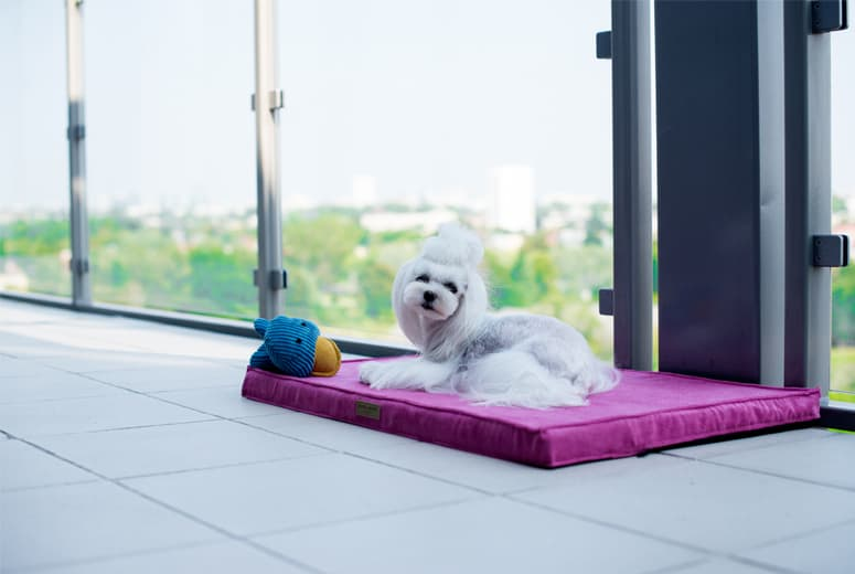 Pink play matt for dogs