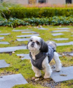 dog jacket SPIRIT grey