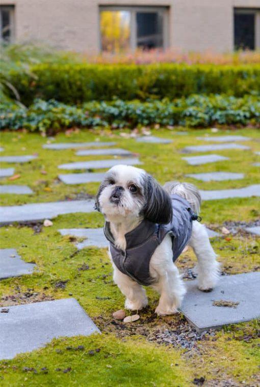 dog jacket SPIRIT grey