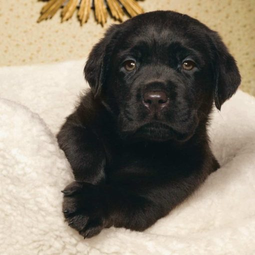 puppy-bed-fleece