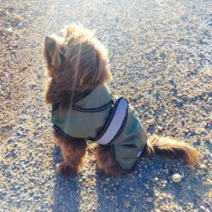 Khaki all season dog coat 1 LR Dog Coat Khaki_preview