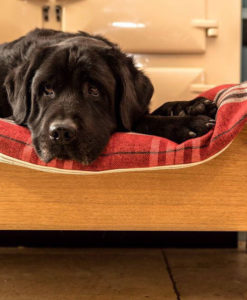 Solid Oak Luxury Raised Dog Bed hand carved