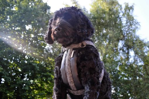 Tweed Adjustable Dog Harness