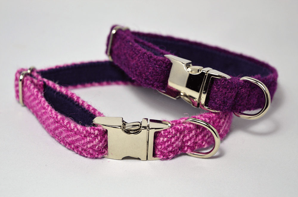 Harris Tweed puppy collars blueberry purple and pink