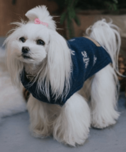 Luxury Dog Jumpers For Extra Warmth And Comfort On Chilly Days