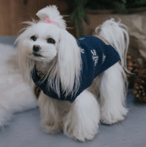 Snowflake Dog Jumper. Luxury Dog Jumpers. Bowl and Bone