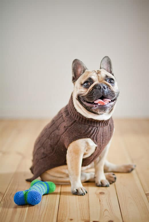 Brown knitted wool dog jumper