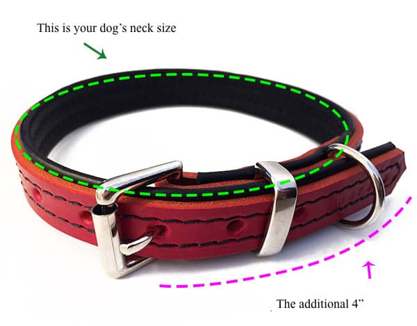 collar measuring guide
