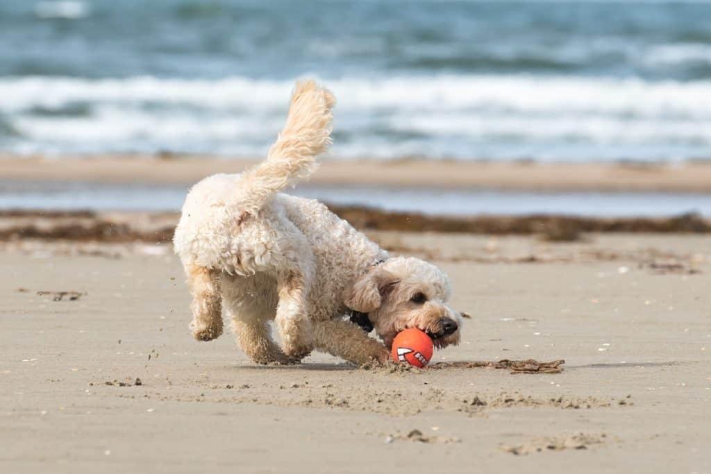 Dog friendly holidays UK