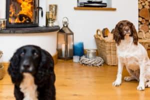 Dog friendly cottages UK