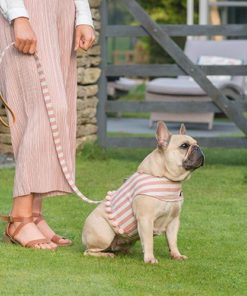 Orange Stripe Brushed Cotton Soft Harness