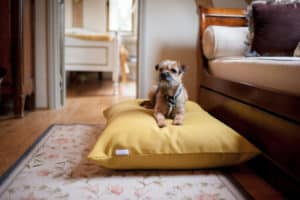 Luxury yellow dog cushion bed