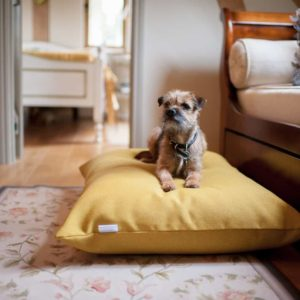 Luxury yellow dog cushion bed