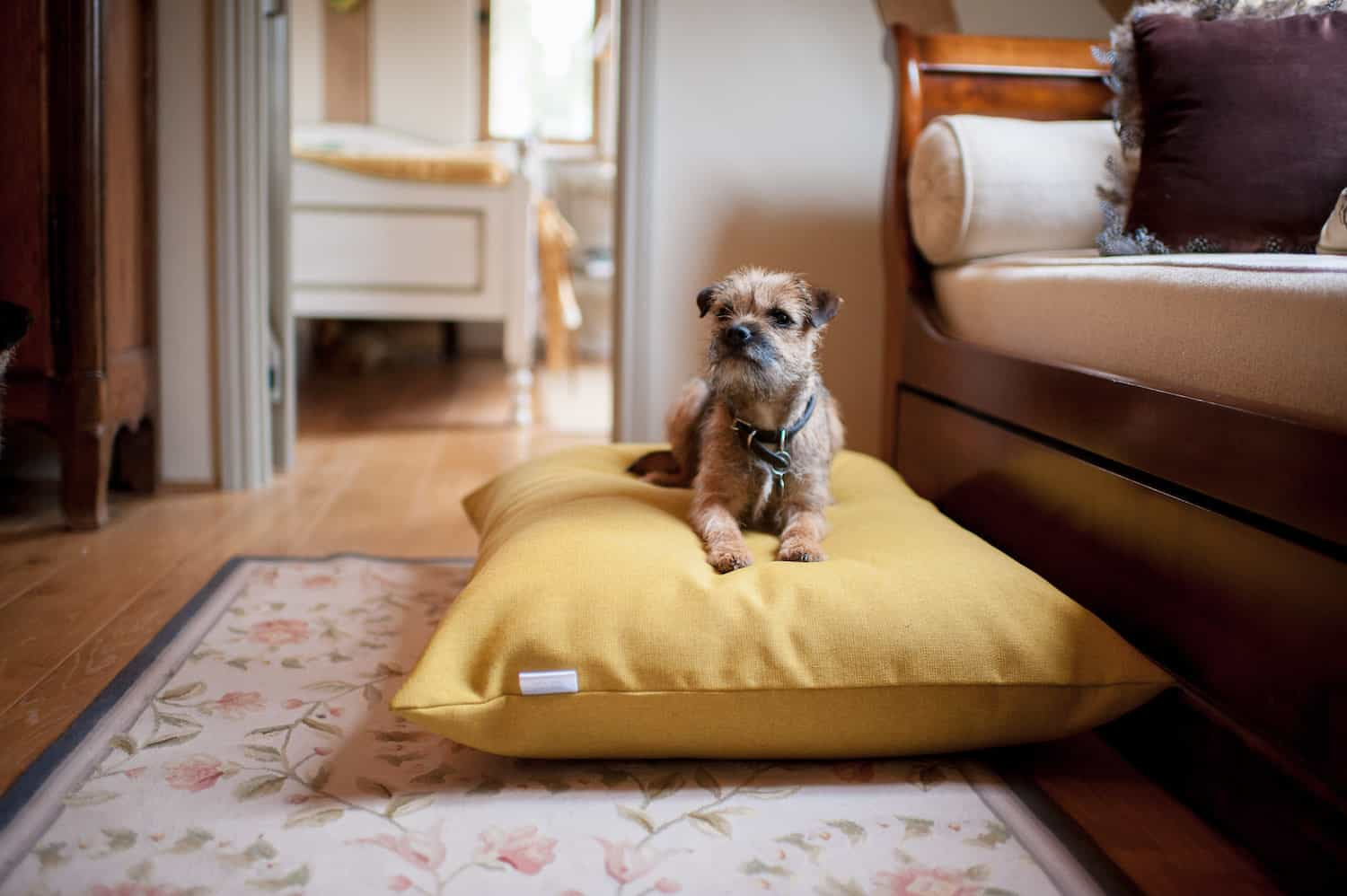 Chartreuse Yellow Twist Dog Cushion Bed The Stylish Dog