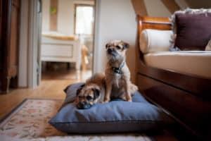 Slate grey twist dog cushion bed
