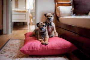 Cerise pink dog pillow cushion