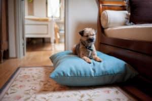 Aqua twist luxury blue dog cushion bed