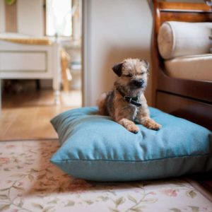 Aqua twist luxury blue dog cushion bed