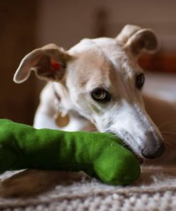 Green wool dog squeaky bone