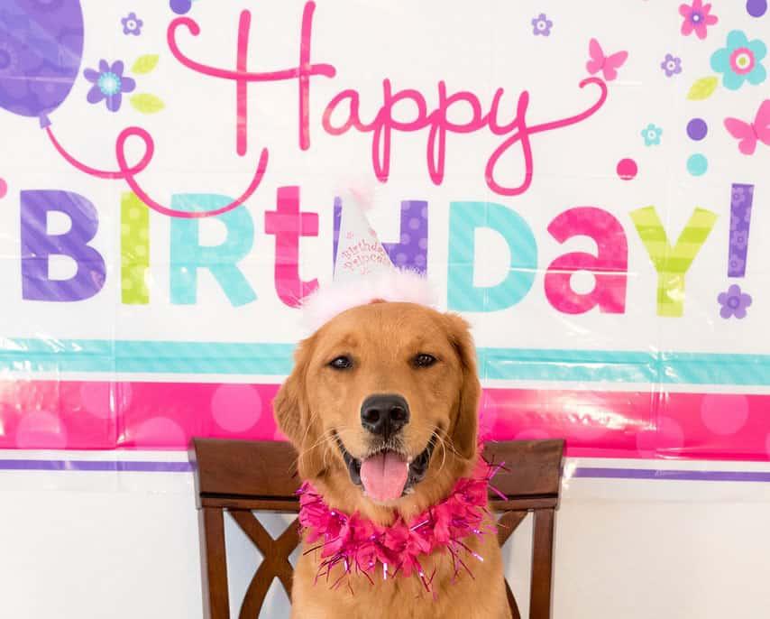 Happy Birthday Dog Gift Voucher