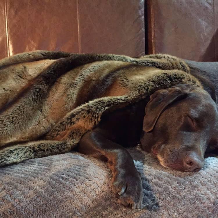 Madagascar faux fur dog blanket throw
