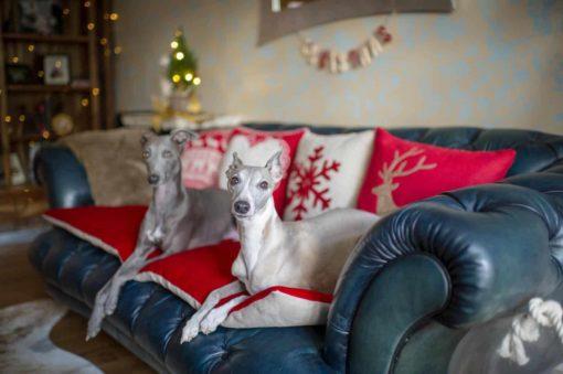 Berry red Velvet Sofa Topper Protection