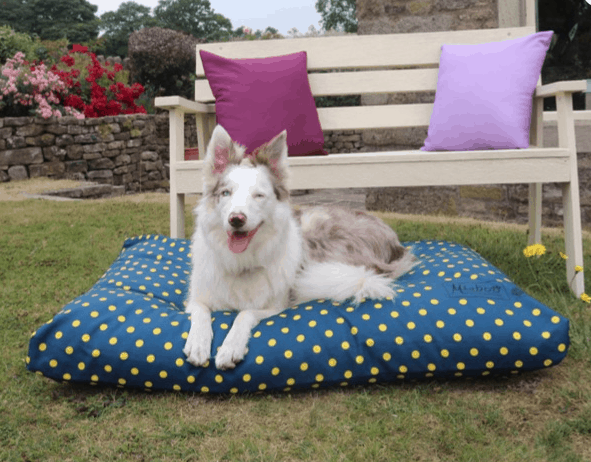 Blue and yellow spotty dog cushion bed