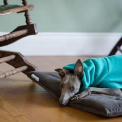 Dog travel bed roll