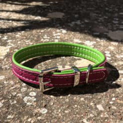 Magenta and lime padded small dog collar