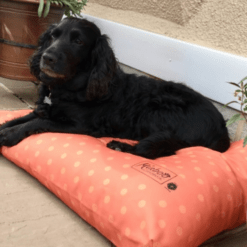 Orange spotty dog cushion bed