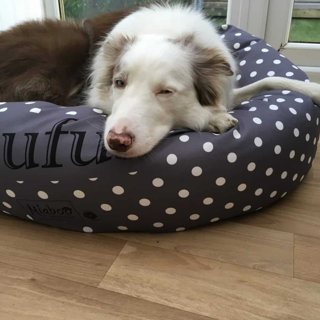 Charcoal grey spotty donut dog bed